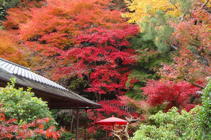 私の京都散策「静かな時の流れを感じる奥嵯峨」を巡る