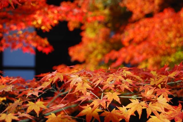 私の京都散策「歴史の営みを感じる大原野で紅葉の秋」を巡る