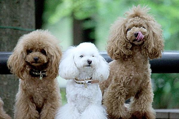 自分の家族の安心のために「ペット保険」を考えて。