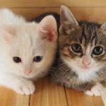 コルクマットは猫を飼うご家庭で大活用。