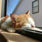 ベッドで快適熟睡の方法を教えます。